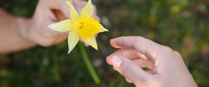 Let's show we care on Daffodil Day 2016